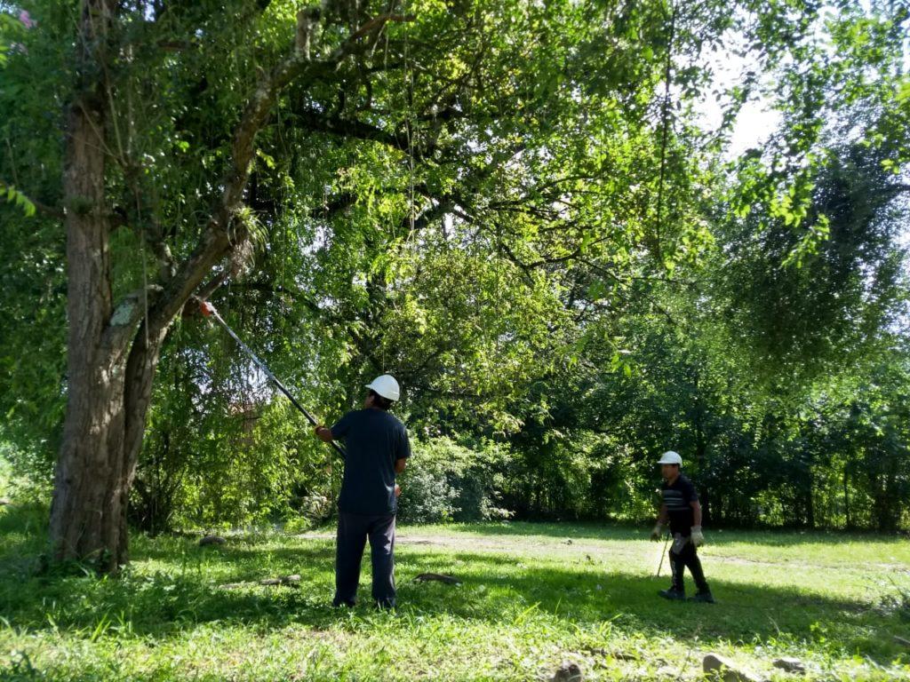 Cuadrilla trabaja en la poda de árboles en el predio del camping El Refugio en Yala